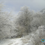 Trees covered with hoarfrost just incredibly beautiful