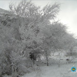 Winter forest in the vicinity of the camp.